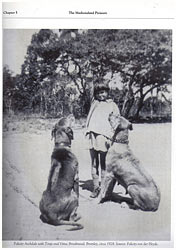 Родезийский риджбек История породы родезийского риджбека - Родезийский риджбек